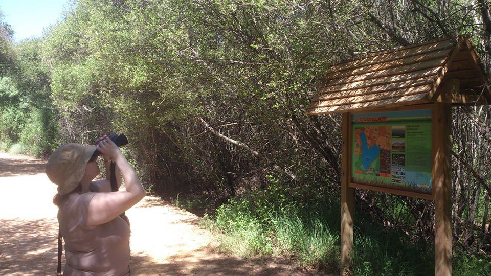Birding en el pantano de La Torre de Abraham